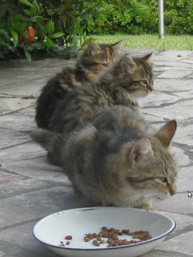 Omega & kitties